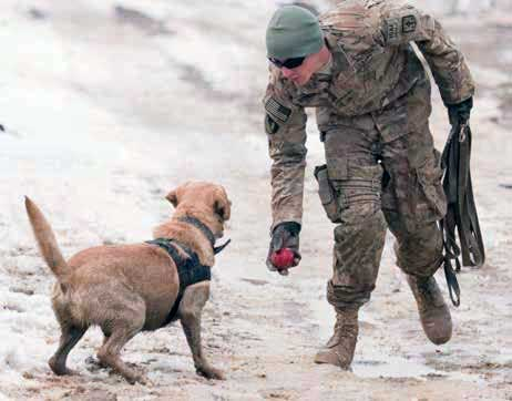 Photo of a soldier playing with a dog