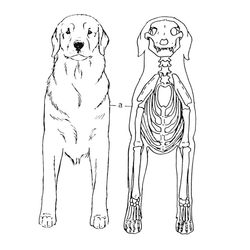 Dogs Structure