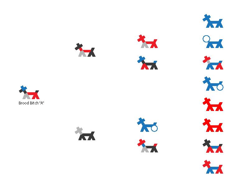 Pedigree Analysis Breeding Better Dogs